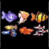 Imagem representando o domínio peixinhos.com.br
