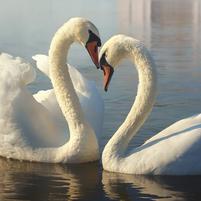 Imagem representando o domínio swan.com.br