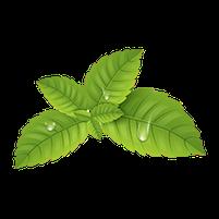 Imagem representando o domínio hortelas.com.br