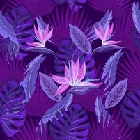 Imagem representando o domínio lilas.com.br