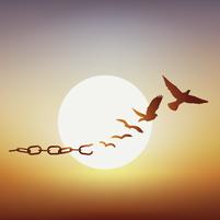 Imagem representando o domínio libertacao.com.br