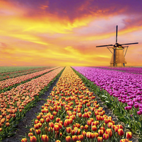 Imagem representando o domínio tulipas.com.br