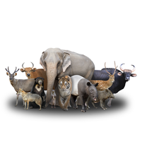 Imagem representando o domínio species.com.br