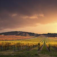 Imagem representando o domínio vinicultura.com.br