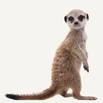 Imagem representando o domínio suricatos.com.br