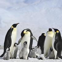 Imagem representando o domínio pinguins.com.br