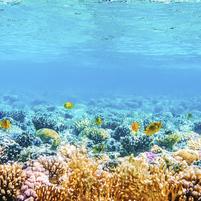 Imagem representando o domínio corals.com.br