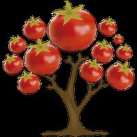Imagem representando o domínio tomateira.com.br