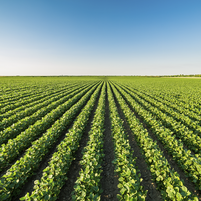 Imagem representando o domínio cultivos.com.br