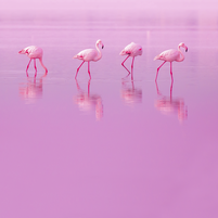 Imagem representando o domínio rosadas.com.br