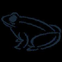 Imagem representando o domínio toads.com.br