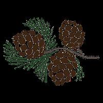 Imagem representando o domínio pinhas.com.br