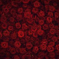 Imagem representando o domínio roses.com.br